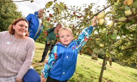 Improve your core knowledge of apples at Gressenhall Farm this Sunday