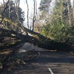 Norfolk County Council's staff praised for huge effort to clear trees from roads