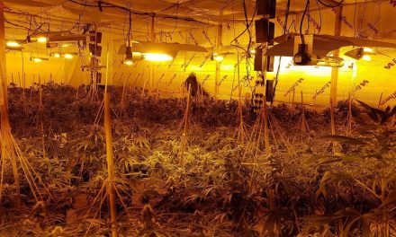 Two arrested as officers discover cannabis factory in Norwich